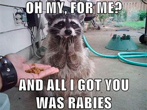 http://pestkill.org/wp-content/uploads/raccoon-was-rabies.jpg